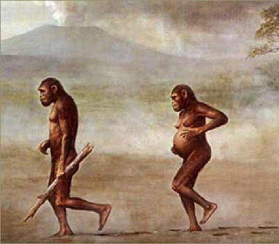 características de Australopithecus