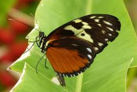 características de Insectos