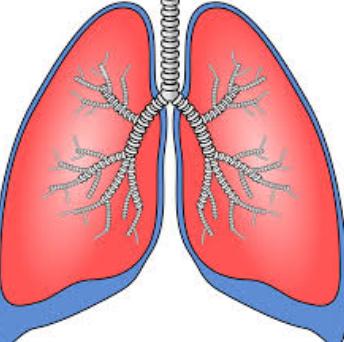 características de Respiración pulmonar
