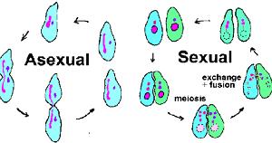 características de Reproducción