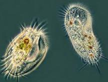 características de Organismos Unicelulares