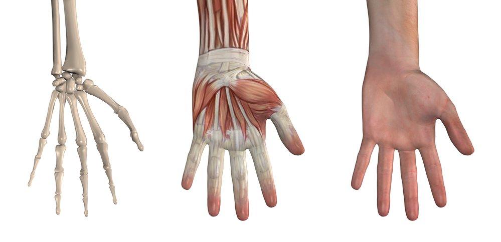características de los Huesos de la Mano