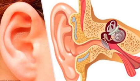 Características del Oído