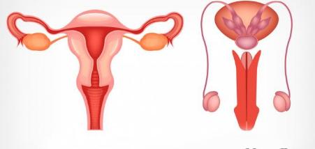 Características del Sistema Reproductivo