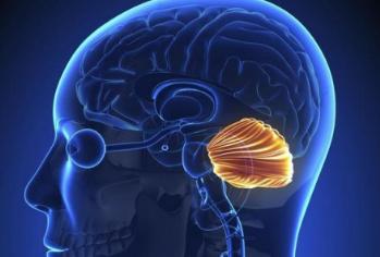 Características Del Cerebelo