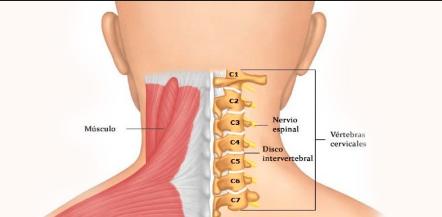 Características De La Columna Cervical