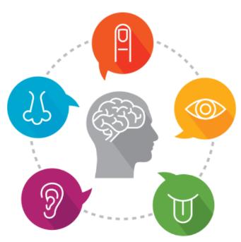 características de los Órganos Sensoriales