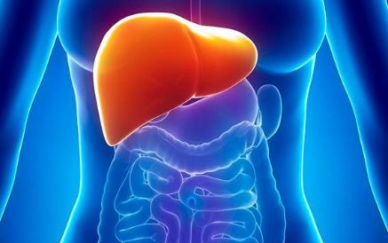 características del Hígado