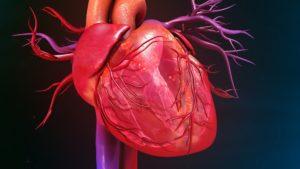 características del Sistema Cardiovascular