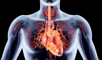 características del Músculo Cardíaco