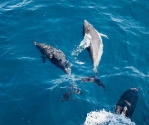 Características de los Cetáceos
